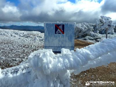 Acebos Montes Carpetanos; viajes agosto; rutas senderismo madrid